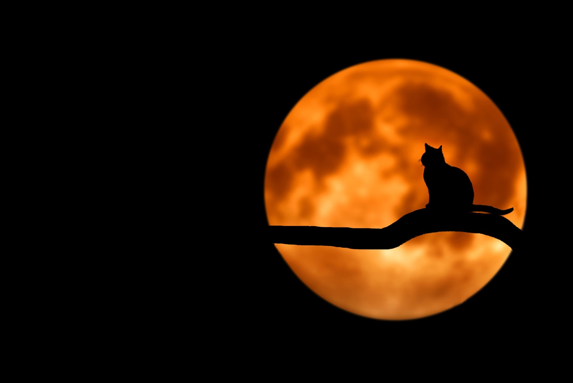 An image with the silhouette of a cat sitting on a branch in front of an orange moon.